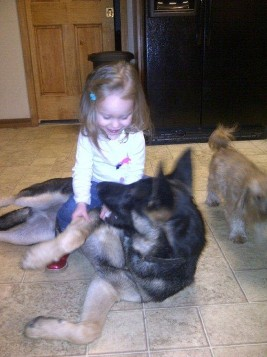 concord-german shepherd puppy little girl